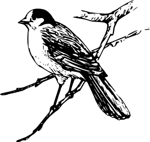 Bird Clip Art at Clker.com.