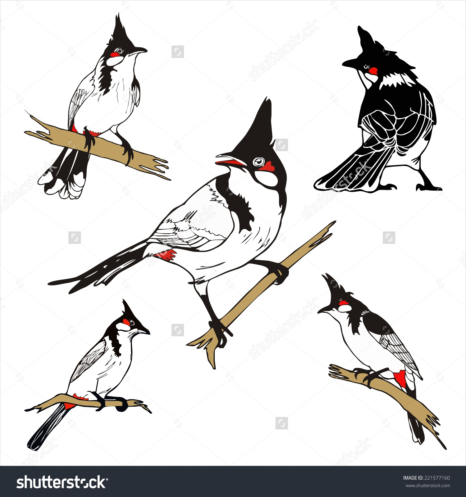 Five Character Redwhiskered Bulbul Birda Drawing Stock Vector.
