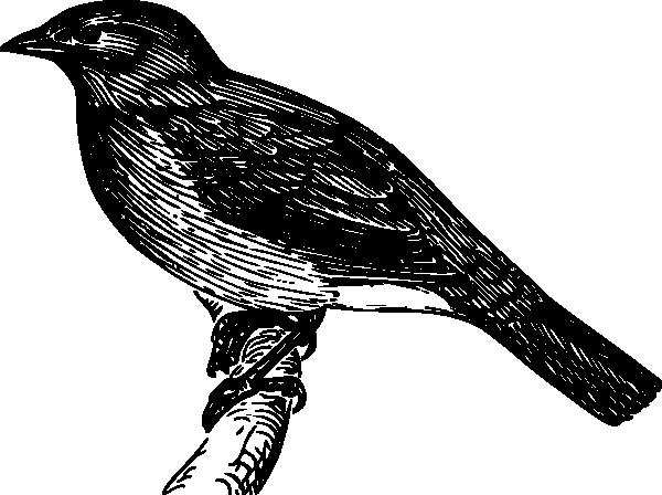 Bulbul clip art Free Vector / 4Vector.