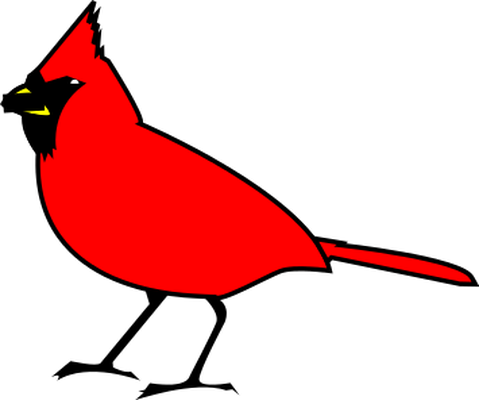 Vented bulbul bird.