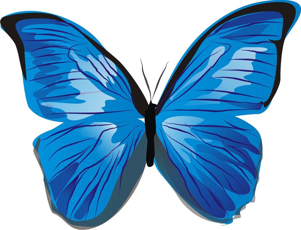 Blue butterflies png #26560.