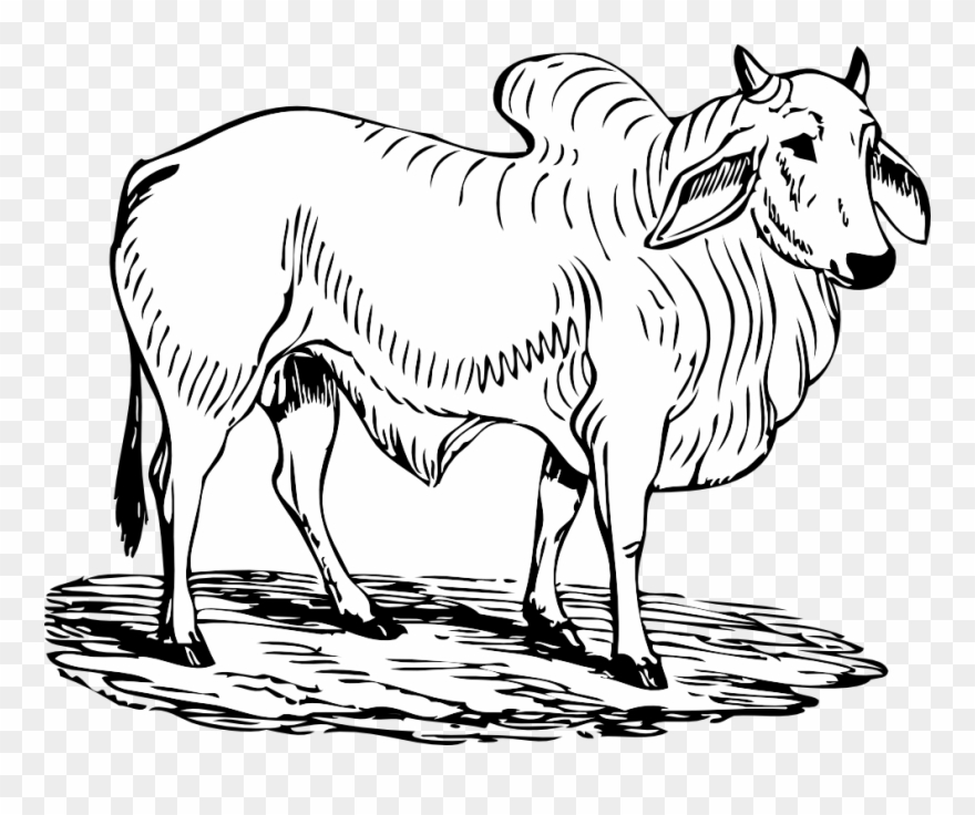 Bull Black White Line Art Tatoo Tattoo.