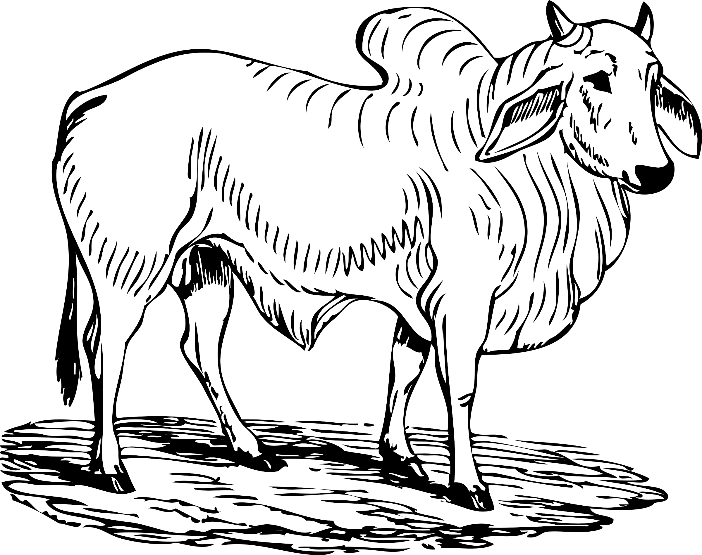 HD This Free Icons Png Design Of Brahma Bull.