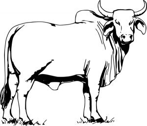 Bull Run The Charge By Pyle Clip Art Download.
