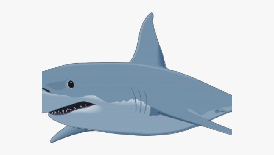 Bull Shark Clipart Transparent Background.