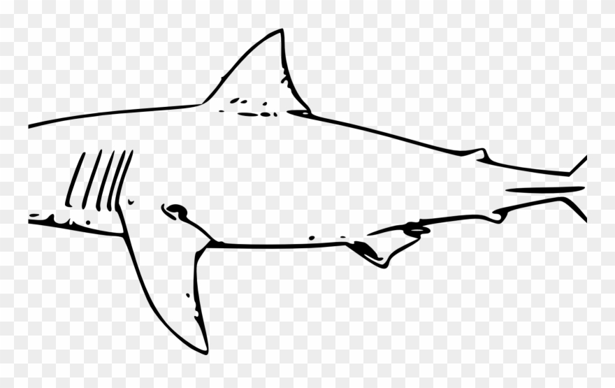 Bull Shark Clipart Line Drawing Pencil And In Color.