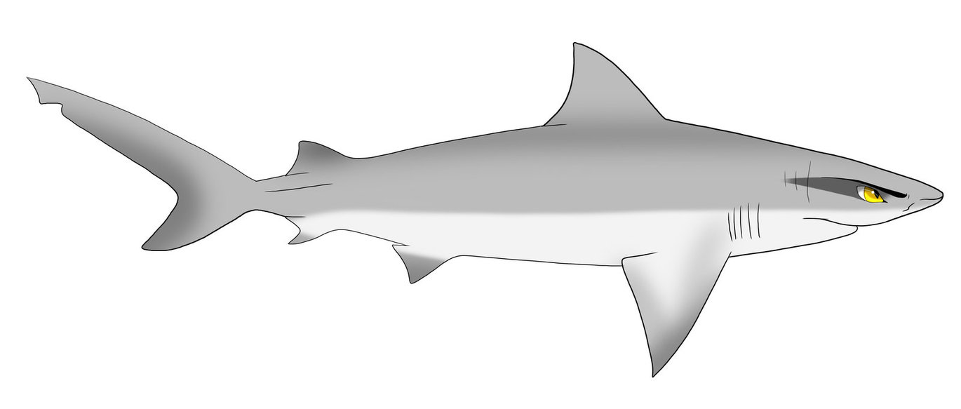 Ben the Bull shark by zavraan on Clipart library.