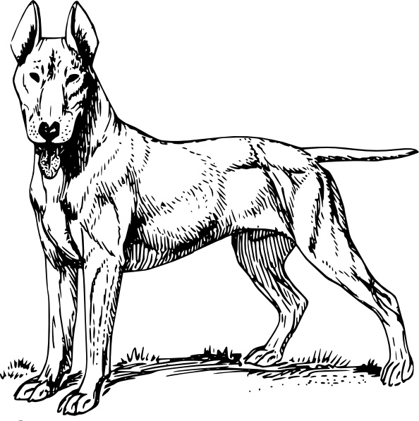 Bull Terrier clip art Free vector in Open office drawing svg ( .svg.
