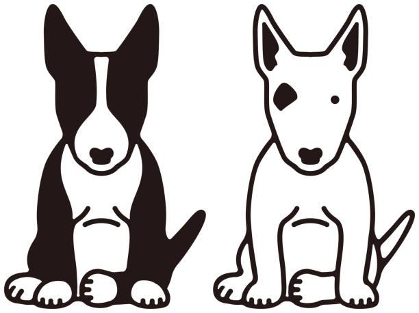 Best Bull Terrier Illustrations, Royalty.