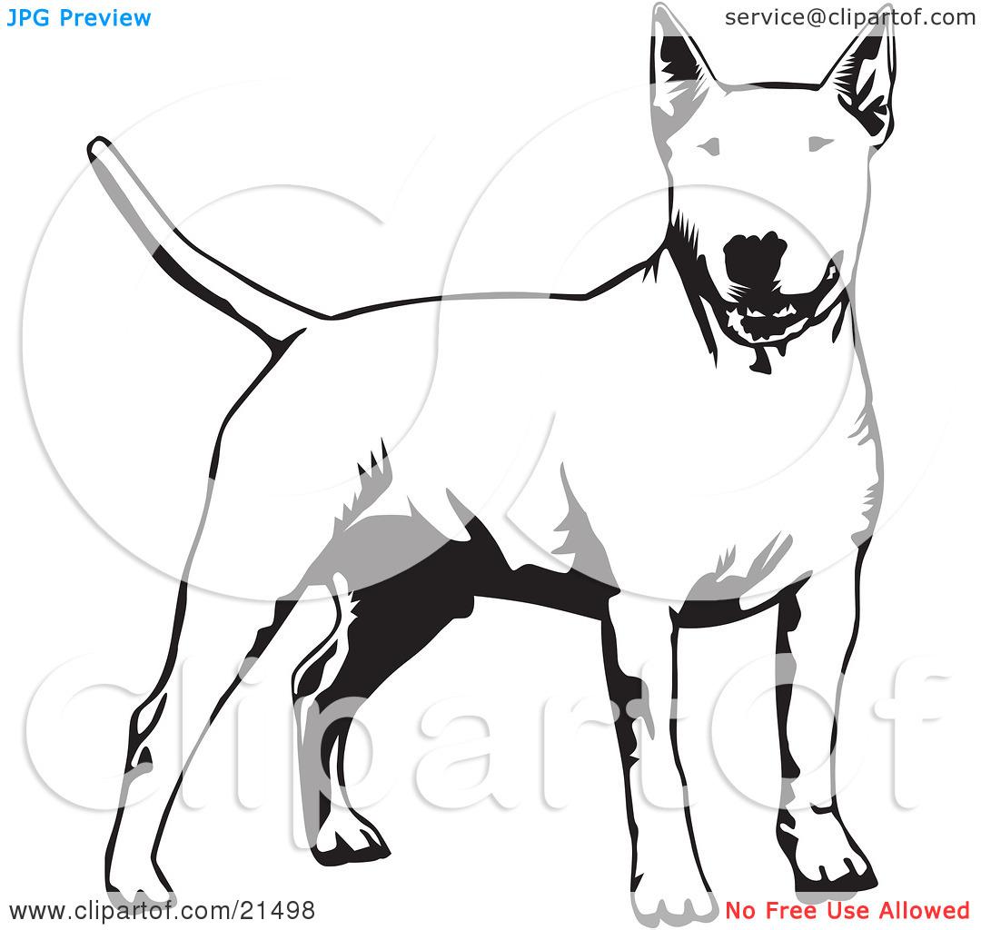Clipart Illustration of an Alert Bull Terrier Dog Holdings Its.