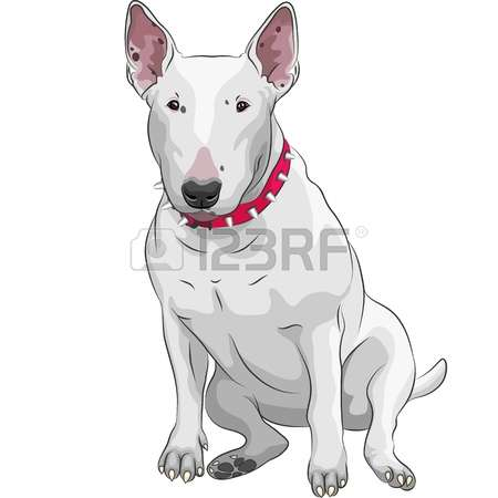 1,434 Bull Terrier Stock Vector Illustration And Royalty Free Bull.
