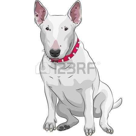 1,434 Bull Terrier Stock Vector Illustration And Royalty Free Bull.