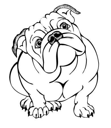 English bulldog clipart 6 » Clipart Station.