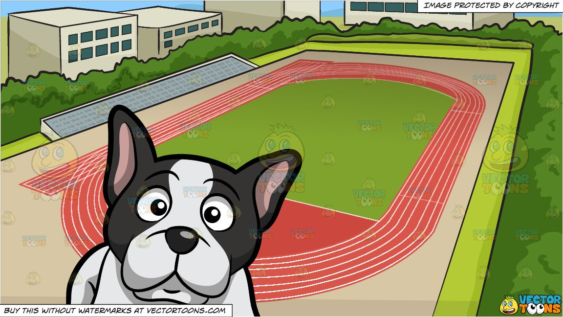 An Alerted Young French Bulldog and Track And Field Background.