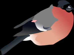 Bullfinch Clip art.