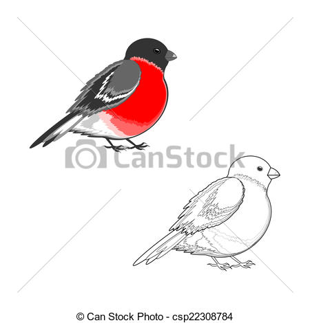 Vector of Eurasian bullfinch (Pyrrhula pyrrhula) isolated on a.
