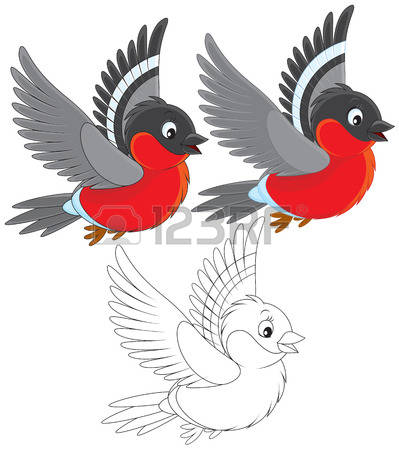 4,242 Bullfinch Stock Vector Illustration And Royalty Free.