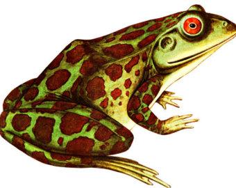 Frog graphics.
