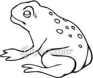 and White Bullfrog.