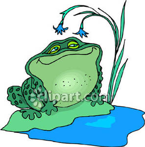 Bullfrog Enjoys Day By the Pond.