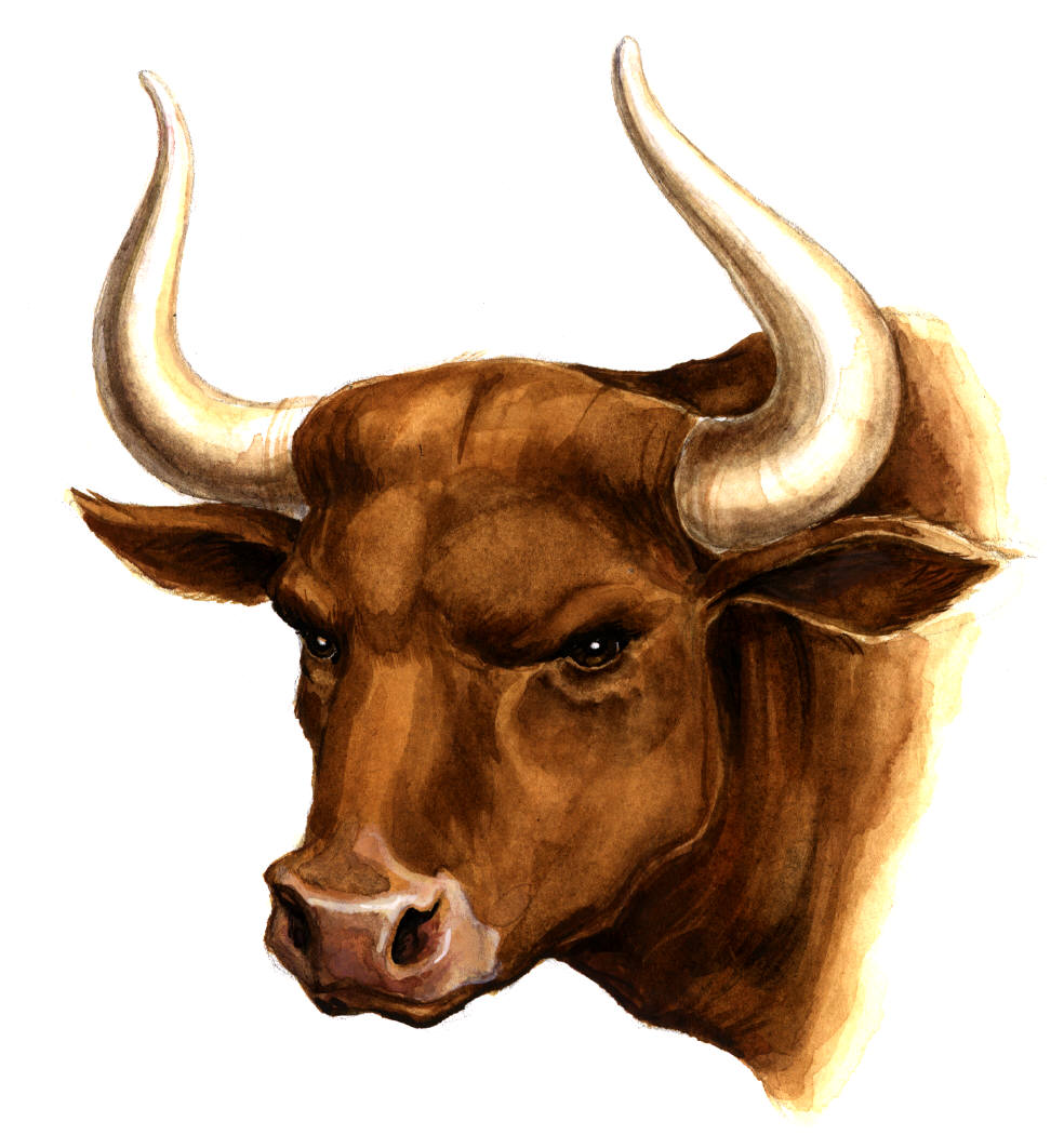 24 May Indian Stock Market Today Opens At Bullish Condition Nifty.