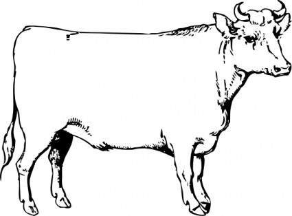 Bullock Animal Clipart.