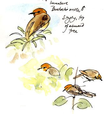 The Magpie Nest: Bird By Bird.