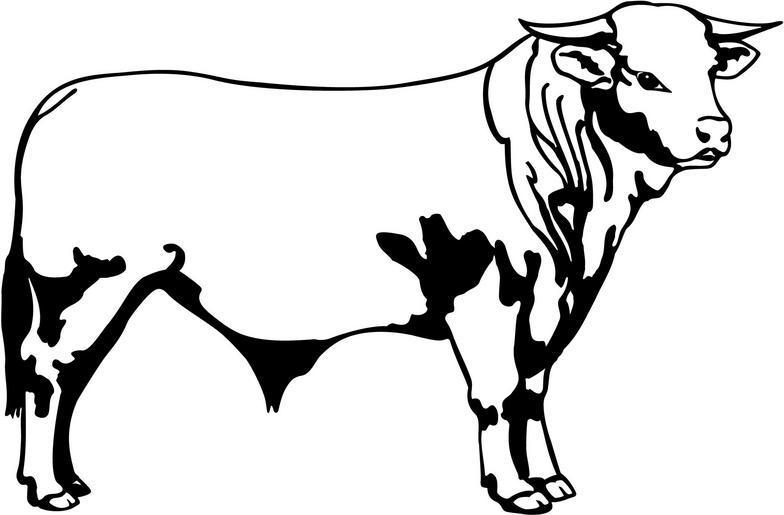 Bull Clip Art & Bull Clip Art Clip Art Images.