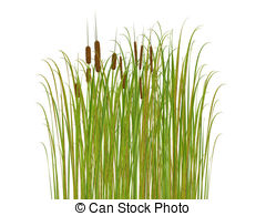 Bulrushes Illustrations and Stock Art. 293 Bulrushes illustration.