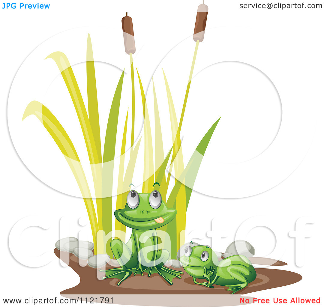 Cartoon Of Cute Frogs By Bulrush Plants.