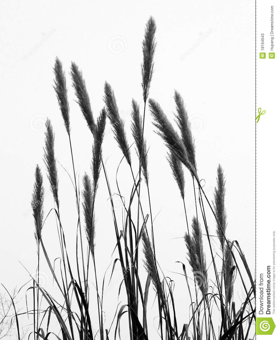 Cattail Silhouette The Bulrush #dkCPIY.