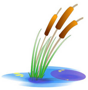 Clipart Picture of Cattails in a Pond.