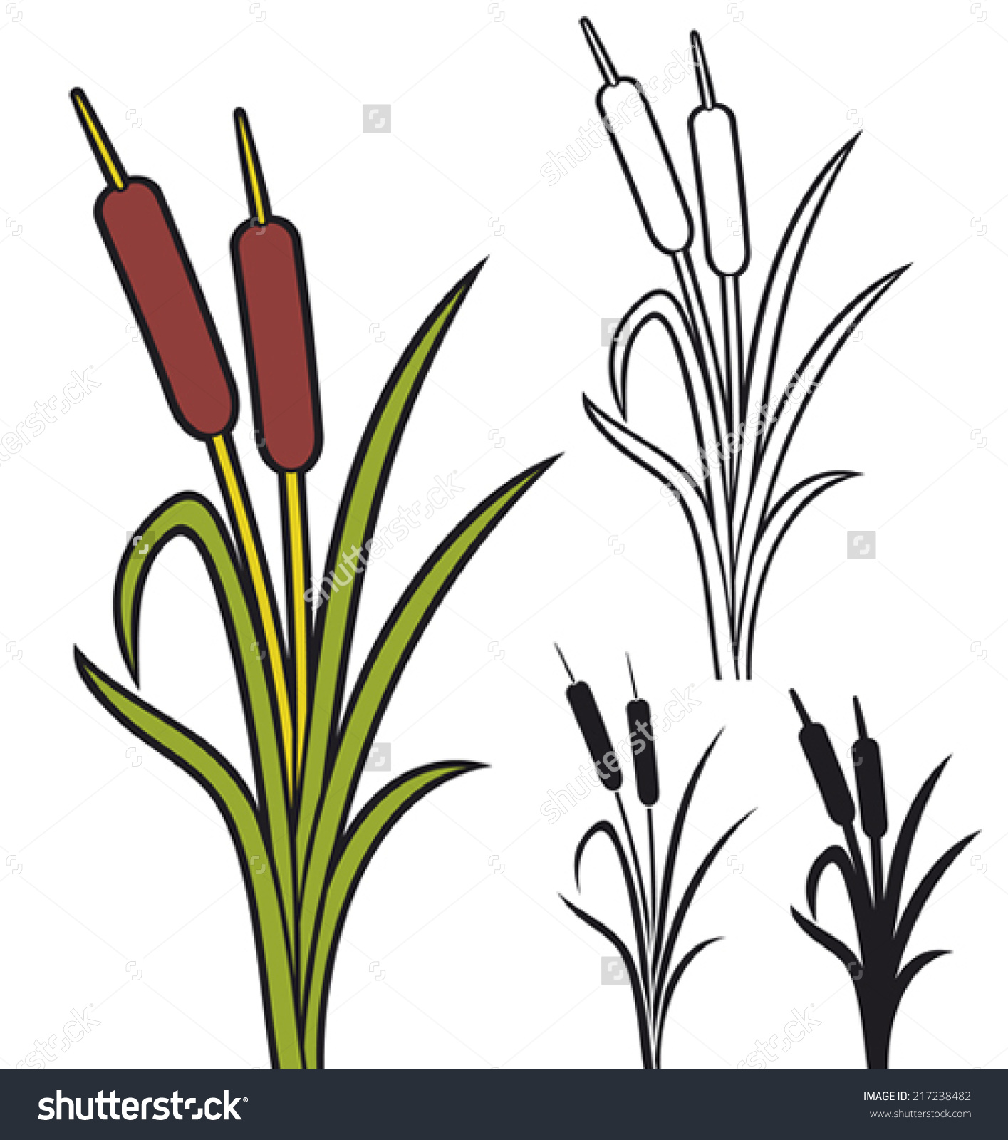 Reeds Vector Illustration Bulrush Grass Stock Vector 217238482.