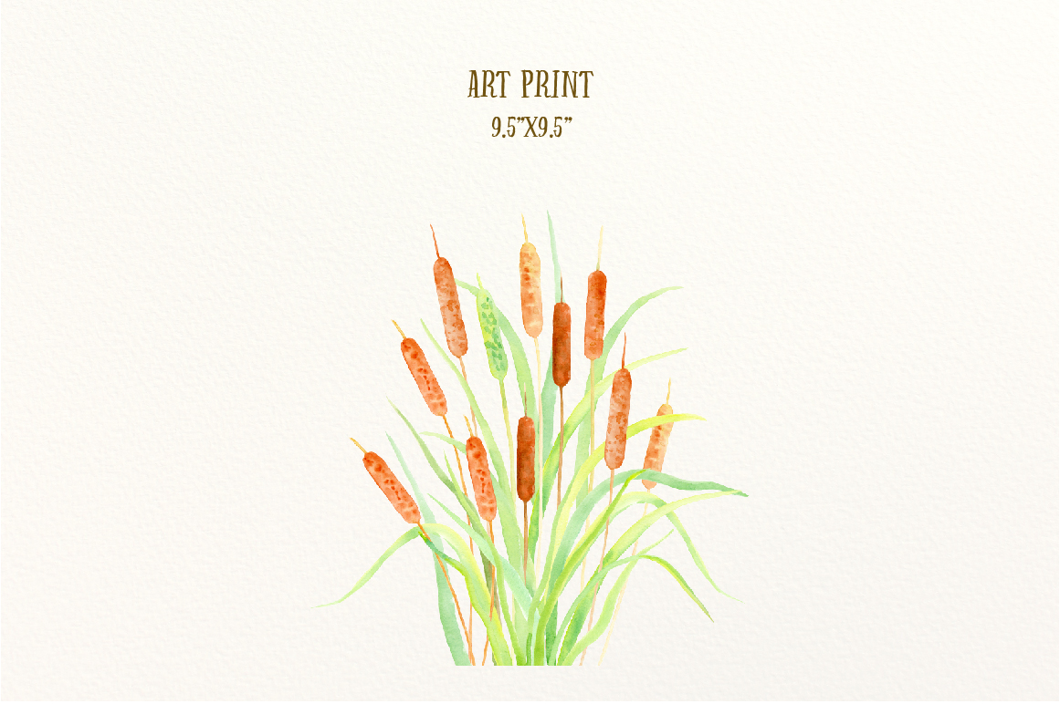 Watercolor Clip Art Cattail Bulrush by Cornercroft.