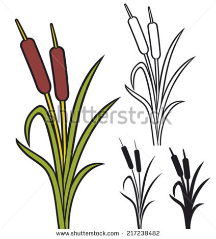 Bulrushes Stock Photos, Royalty.
