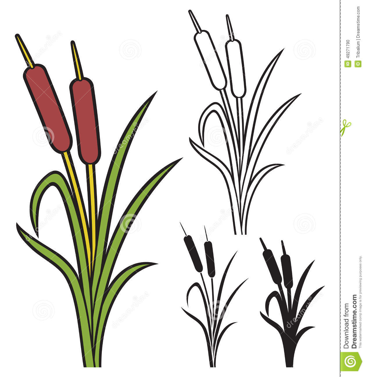Reeds Stock Vector.
