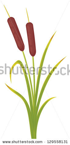 Bulrushes Stock Vectors, Images & Vector Art.
