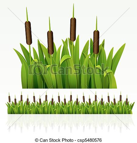 Sedge Illustrations and Clipart. 422 Sedge royalty free.
