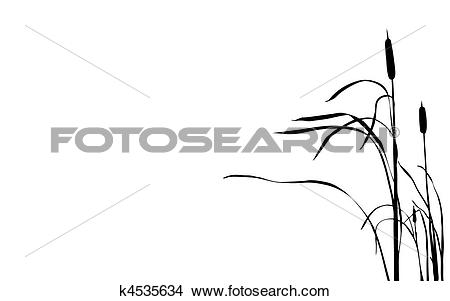 Clipart of vector illustration bulrush on white background.