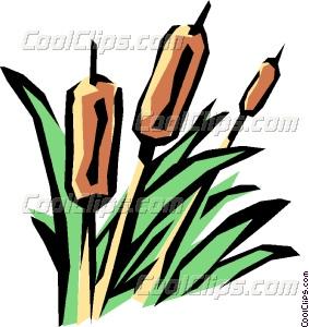 Bulrushes Vector Clip art.