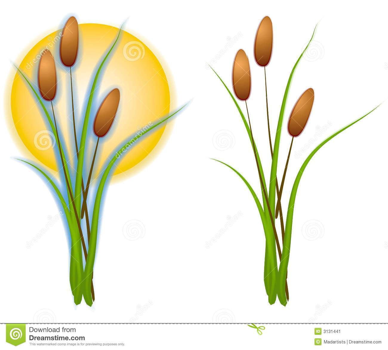 Cattail Stock Illustrations.