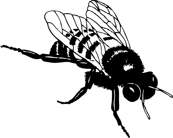 Bumble Bee clip art Free vector in Open office drawing svg ( .svg.