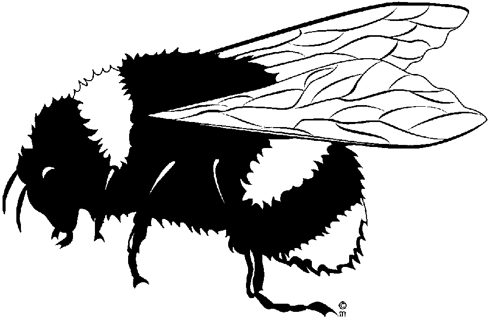 Bee black and white bee clipart black and white craft projects.