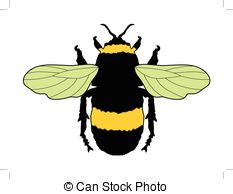 EPS Vector of Bombus terrestris or buff.