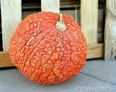 Bumpy pumpkin clipart.