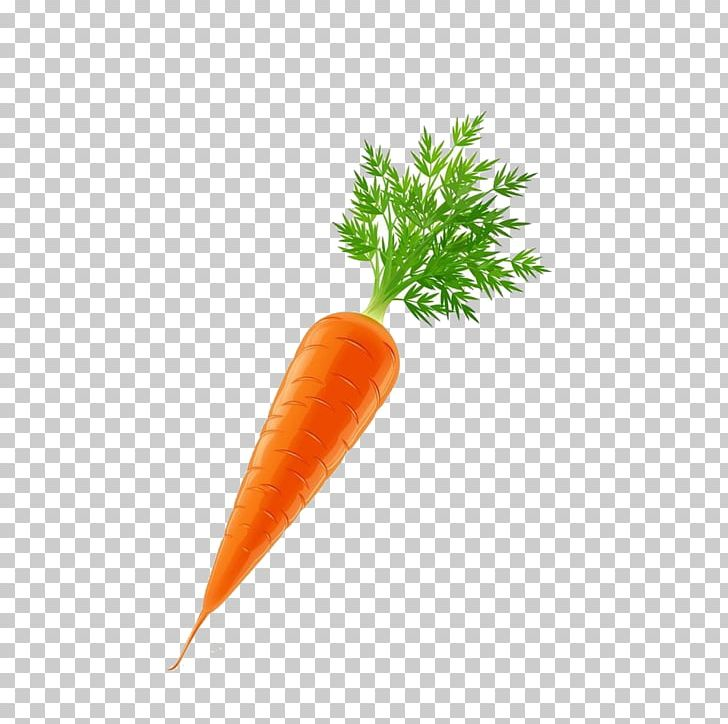 Vegetable Carrot Euclidean PNG, Clipart, Baby Carrot, Bunch.