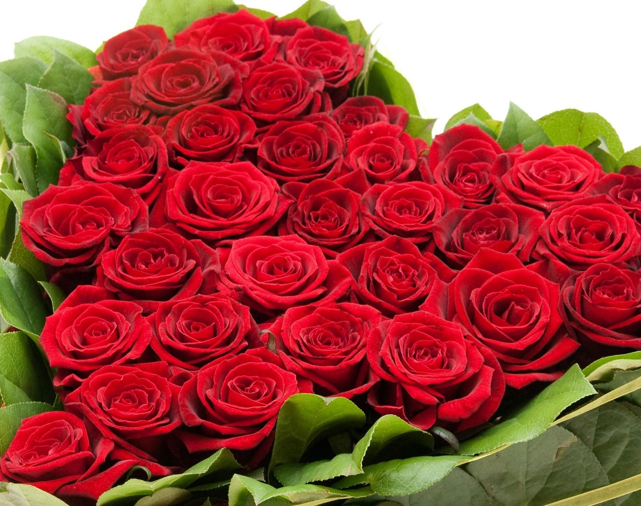 Flowers Images Roses For Free Download 5 Mobile Wallpapers.