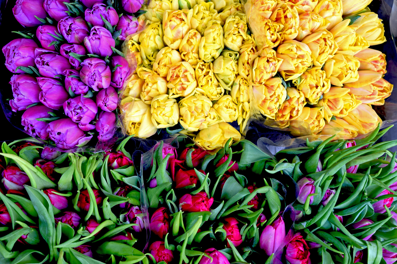 Yellow Bunch of Flower Beside Purple Flower · Free Stock Photo.