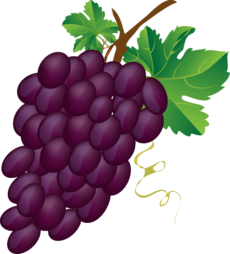 Seedless grapes clipart - Clipground