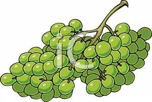 Bunch of Grapes Clip Art.